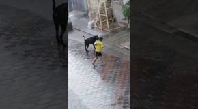 Boy and Dog Have a Blast in the Rain