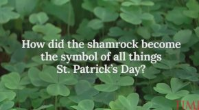 Learn About St. Patrick's Day So You Can Annoy Your Drunk Friends With Facts