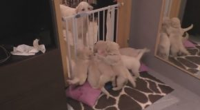 Experienced Dog Mom Teachers Her 8-Week Old Pups How to Be Patient