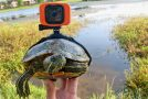 Guy Strapped a GoPro On a Turtle