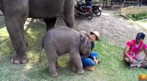 A Baby Elephant Loves to Play With This Cute Young Man