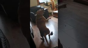 Bird Shows Dog Who's Boss