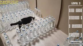 Mission Impossible. Bottle Maze With Water For The Cat