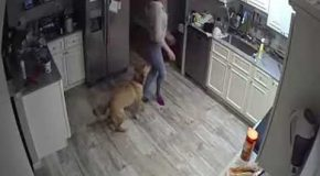 This Remarkable Scene Was Caught On Tape