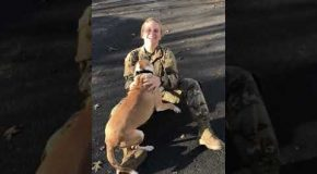 Dog Takes Time To Recognize Army Personnel After She Comes Back Home