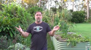 8 Easy Vegetables To Grow At Home!