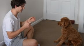 Guy Teaches His Dog To Play Rock, Paper And Scissors!