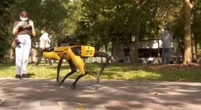 Robot Dog Takes A Stroll In A Singaporean Park