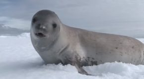 "Seals Sings ""Kiss From A Rose""!"