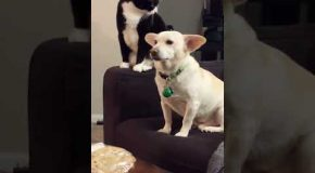 Cat Considers Hitting Dog For A Long Time Before It Actually Does So
