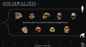 Decoding Seven Million Years Of Human Evolution!