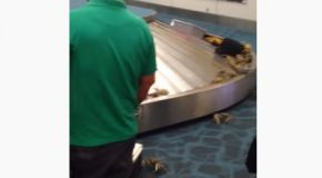 Someone Tried To Sneak Live Crabs Through Airport Customs!