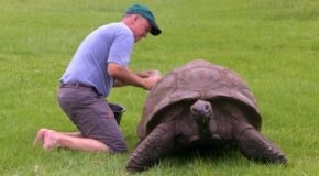 The Oldest Tortoise In The World Is A 188 Years Old!