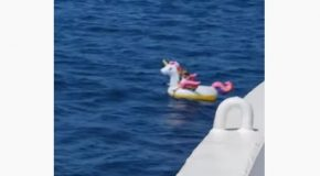 Girl Floating On An Inflatable Unicorn Gets Lost, Gets Saved By Ferry Boat!