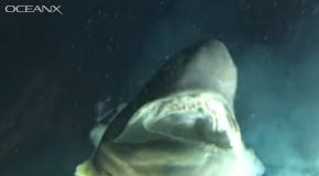 Huge Deep Sea Shark Checks Out A Submarine