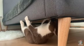 Kitten Walks Upside Down Under A Bed!