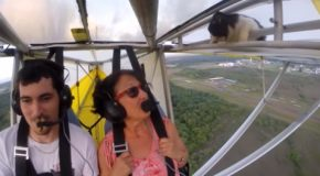 Cat Gets Caught In Two-Person Airplane And Gets A Flight!