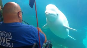 Beluga Whale In Aquarium Is Absolutely Stunned By Man Playing Violin!