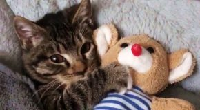 Catto Cannot Sleep Without Cuddling With It's Favorite Stuffed Toy!