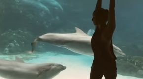 Girl Doing Gymnastics In Front Of Dolphins Makes Them Laugh!