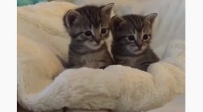 Tiny Kittens Get Scared Of The Giant Finger!