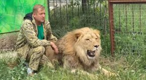 Russian Man Shoos Away Lions Like They Are Tiny Cats!