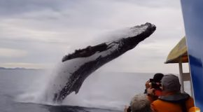 Whale Makes A Sudden Appearance During A Sight Seeing Tour!