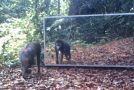 Funny Reactions Of Animals Upon Seeing Themselves In A Mirror!