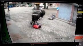 Man Gets Hit By Runaway Bulls, Survives To Tell The Tale